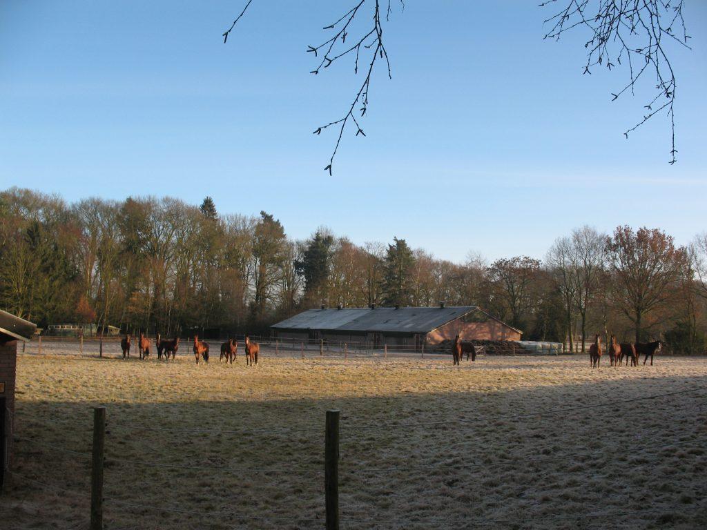 Paarden en mest op Parc Spelderholt